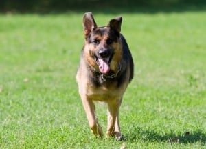 Cyber crime dogs are being trained to tackle criminals on the internet